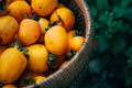 Persimmon on retro desk in basket Royalty Free Stock Photo
