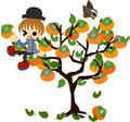 Persimmon tree a boy climbs the and eats a Stock Image