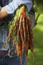 Person holding bunch of carrots Arkivbilder