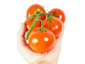 Person holding a bunch of tomatoes Royalty Free Stock Photo