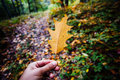 Person holding leaf autumn over forest background Stock Photography
