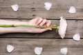 Person holding light pink rose flower and beautiful rose petals on wooden table Royalty Free Stock Photo