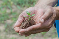 Person holding small plant in a hand has sized for indicates that a thai participates in in environment care Royalty Free Stock Photography