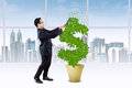 Person manage the growth of money tree Royalty Free Stock Photo
