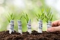 Person planting money plants close up of s hand saplings covered with american dollars Stock Photo