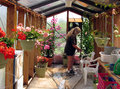 Personal greenhouse a homeowner waters plants in a small Royalty Free Stock Images