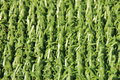 Perspective of artificial fake green plastic grass background Royalty Free Stock Photo