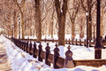 Perspective central park winter is a most magical moment perfect conditions for great pic love the shadows and the light at its Royalty Free Stock Photography