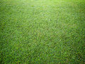 Perspective of grass on ground Royalty Free Stock Photo