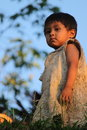 Peruvian child little boy in the amazon of peru looking over the river Stock Images