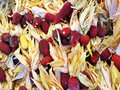 Peruvian colored corn Royalty Free Stock Photo