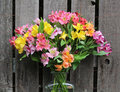 Peruvian Lily in Vase Royalty Free Stock Photo