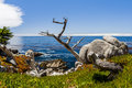 Pescadero point at mile drive in big sur california usa july the is a scenic road through pacific grove and pebble beach Royalty Free Stock Photography