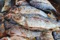 Pescados salados Foto de archivo libre de regalías
