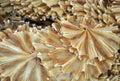 Pescados salados Imagen de archivo