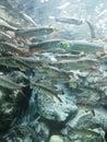 Pesce Immagini Stock Libere da Diritti