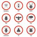 Y insecto icono