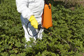 Pesticide spraying vegetables with pesticides in a garden Stock Photography