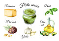 Pesto sauce ingredients. Watercolor hand-drawn illustration