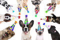 Pet Animals Isolated Wearing Birthday Hats for a Party Royalty Free Stock Photo