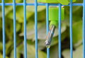 Pet automatic drinker mobile in wire cage Royalty Free Stock Photo