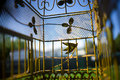Pet Birds Perspective In Cage Royalty Free Stock Photo