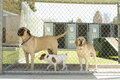 Pet boarding large and small dogs in a facility Royalty Free Stock Photography