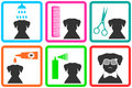 Pet care icons with fashion doggy with sunglasses Stock Image