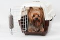 Pet carrier with dog opened travel plastic yorkshire terrier inside Royalty Free Stock Photography