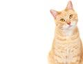 Pet cat. Stock Images