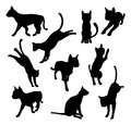 Pet cat silhouettes a set of including the playing jumping and walking Stock Photos