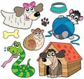 Pet collection 2 Stock Photography