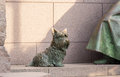 Pet dog at roosevelt memorial washington dc detail of by statue in monument to president franklin delano in Stock Images