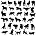 Pet dogs silhouette vector collection Stock Photos