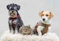 Pet family portrait of on white blanket Royalty Free Stock Images