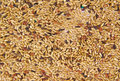 Pet food for birds. Seed mixture as background Royalty Free Stock Photo