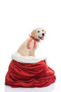 Pet gift for christmas holiday dog Stock Image