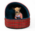 Pet house Royalty Free Stock Photos