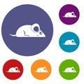 Pet mouse icons set Royalty Free Stock Photo