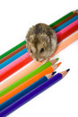 Pet and pencils Stock Photo
