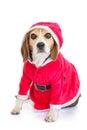 Pet Santa Christmas Holiday Gift