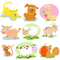 Pet set Royalty Free Stock Images