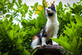 Pet striped cat in garden domestic black orange white Stock Photo