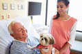 Pet therapy dog visiting senior male patient in hospital with female volunteer smiling Royalty Free Stock Image