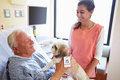 Pet therapy dog visiting senior male patient in hospital happy with female volunteer Royalty Free Stock Photo