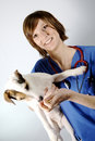 Pet and vet Royalty Free Stock Photo