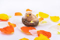 Petals with small nest and bird in it. Royalty Free Stock Photo