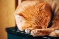 Petite kitten cat sleeping on bed rouge paisible Photo libre de droits