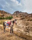 Petra horse a tied near the entrance to al siq the canyon leading to jordan Royalty Free Stock Photos