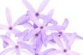 Petrea flowers queen s wreath sandpaper vine purple wreath on white Royalty Free Stock Images